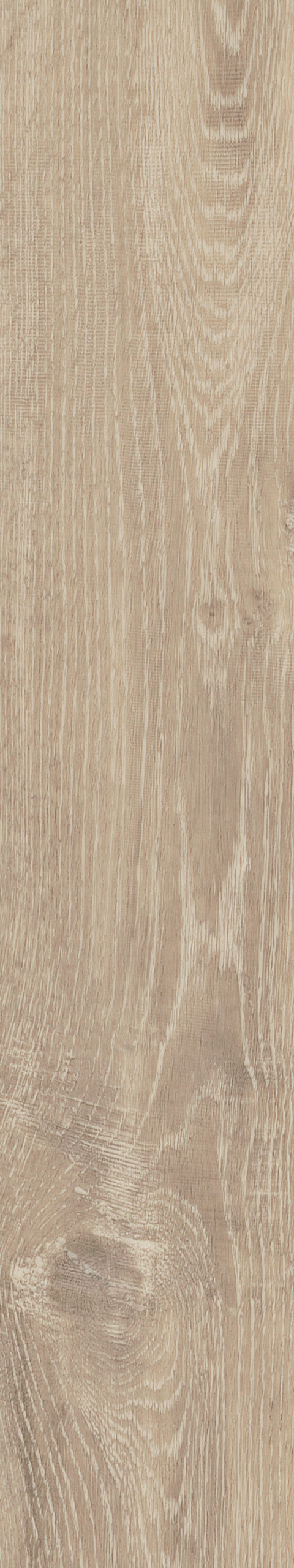 Parva Oak Sardinia