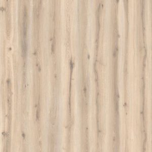 Forest Oak Pistac 24401226
